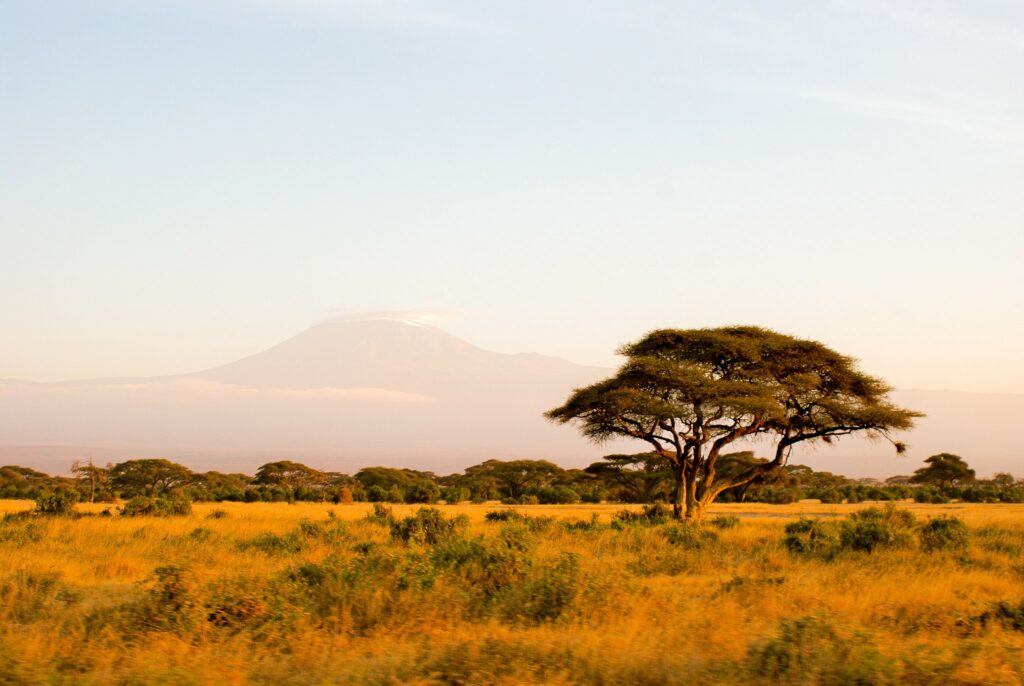 A baobab and the Kilimandjaro