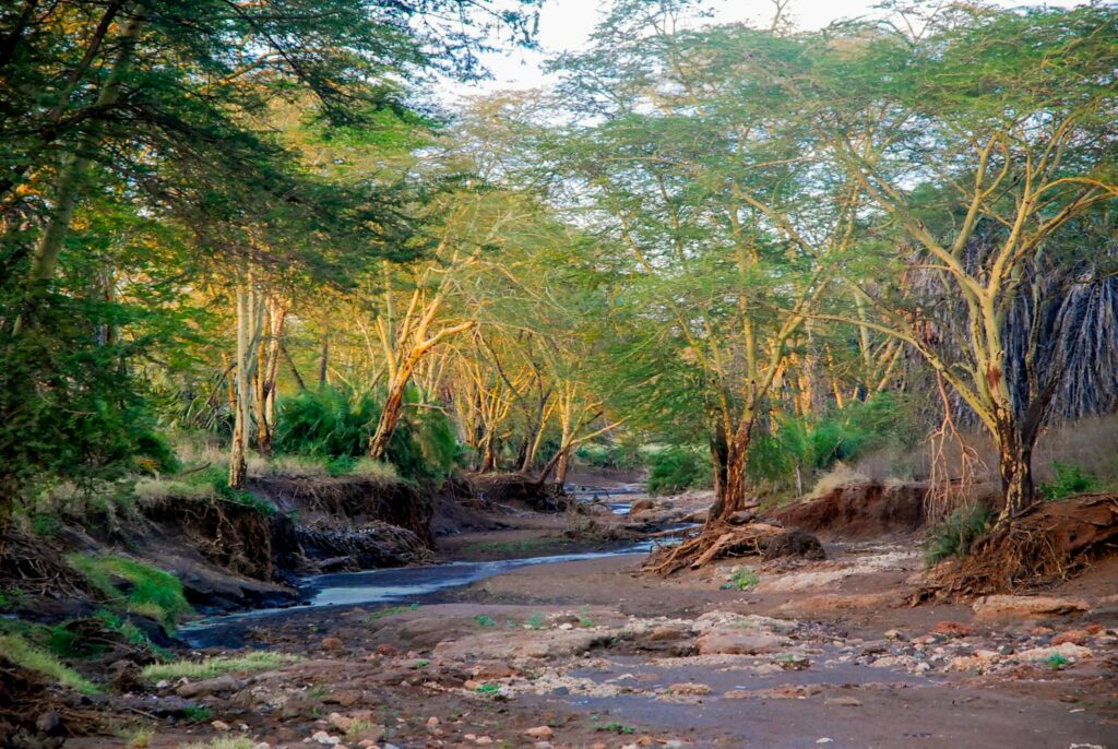 Dried river in a trail of Tsavo West National Park