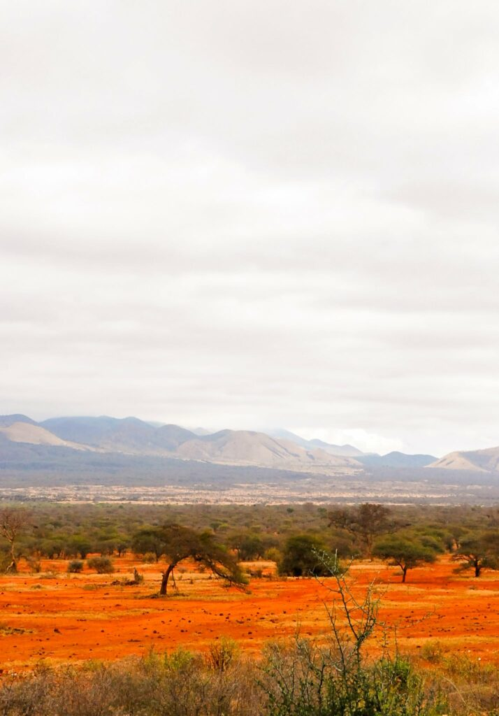 The savannah of Tsavo West National Park