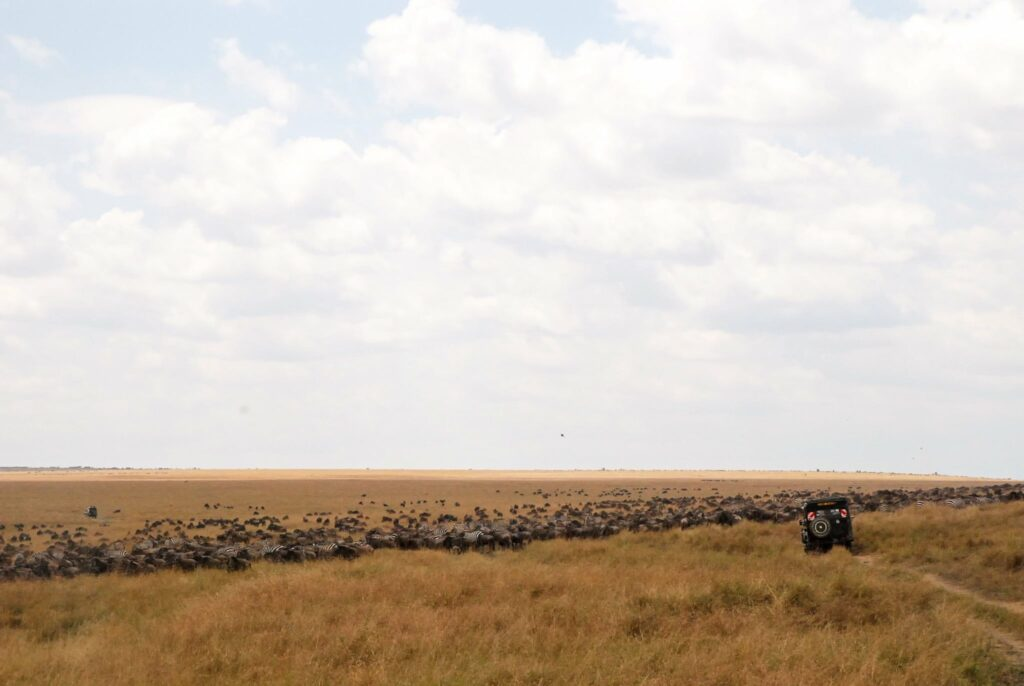 Jeep and wilderness - Masai Mara