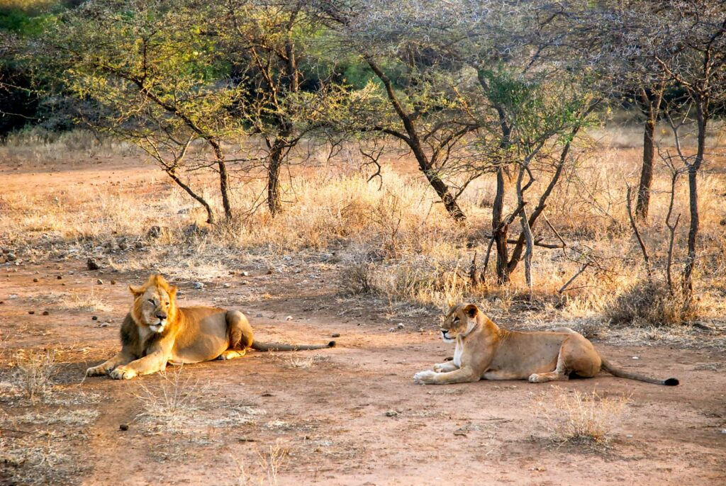 Lyon - Tsavo West National Park