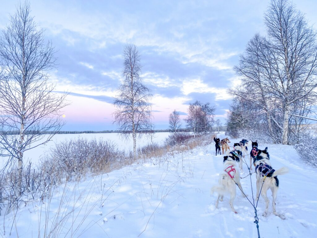 Dog Sledding in Skaulo, Swedish Lapand
