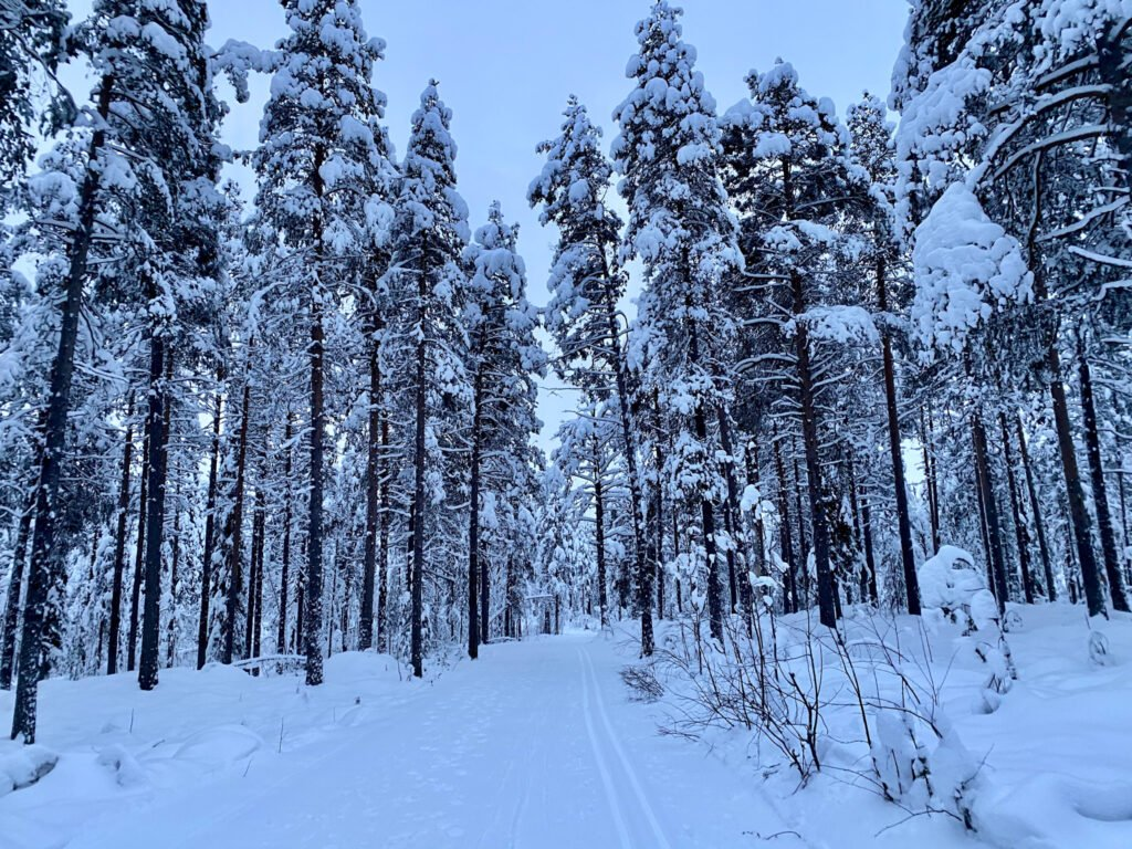 Forest and Snow in Sweden